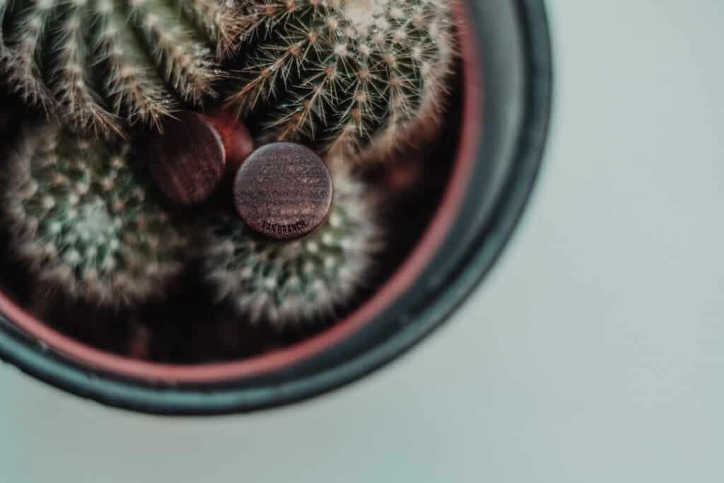 Handgefertigter Ohrplug mit Herz aus Chechen in 16mm, liebevolle Handarbeit mit Ilex Rückseite mit Logo